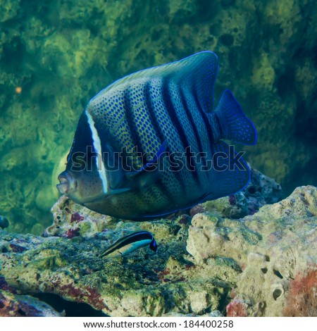 Stock images royalty free images vectors shutterstock for Weird freshwater fish