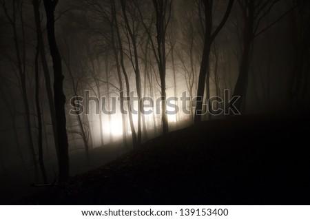 strange light in a dark forest at night - stock photo