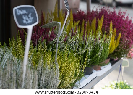 STRASBOURG, FRANCE - OCTOBER 10, 2015: Flower stand outside - stock photo