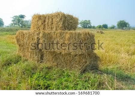 Straw bale on rice fields - stock photo