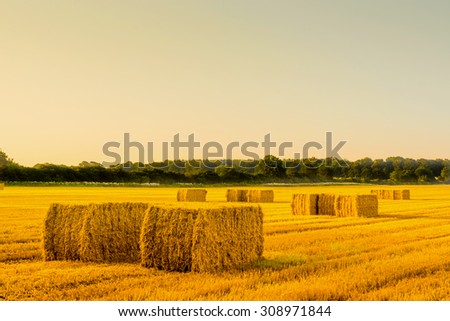 Straw bales in a countryside landscape in the morning - stock photo