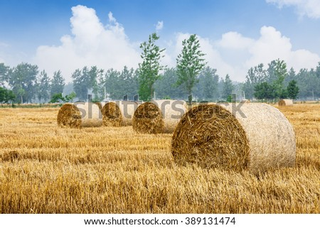 Straw bales Scenery in the country farm