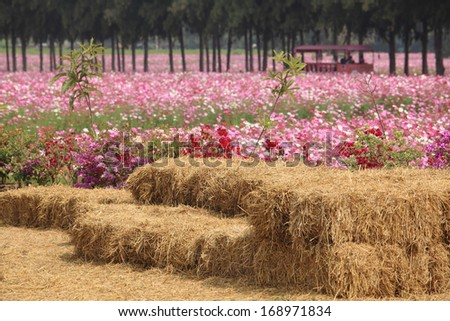 Straw cube piles in flower field - stock photo