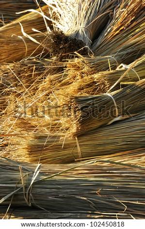 Straw Morning Light Thailand Day - stock photo