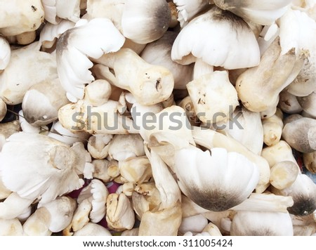 Straw mushrooms in Thailand market