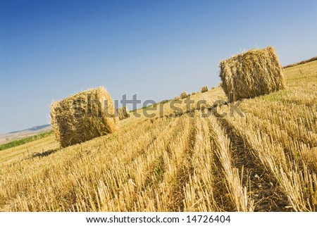 straw rolls in a field against blue sky; summer harvests