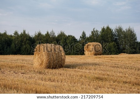 Straw rolls on a autumn field