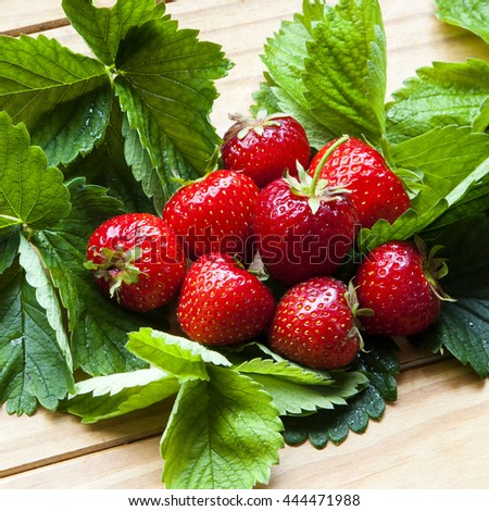 Strawberries bursting with healthy delicious fruit - red, ripe, tasty and succulent - on strawberry leaves.  - stock photo