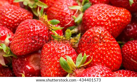 Strawberries freshly picked in the basked