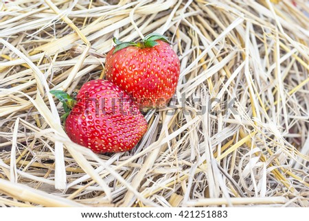 Strawberries fruit and dry straw