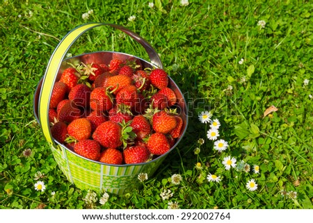 Strawberries in a basket.  bowl of fresh strawberries on grassy lawn