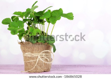 Strawberry bush in pot  on wooden table, on light background - stock photo