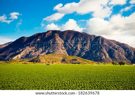 Strawberry field on a farm against some dramatic mountains make for a unique landscape image of Southern California. - stock photo