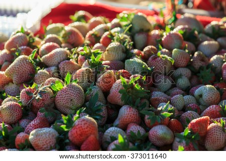 Strawberry, fruit, Strawberry trees