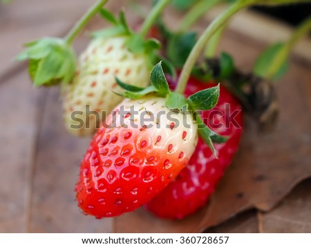 Strawberry fruits on the branch in the planting strawberry.