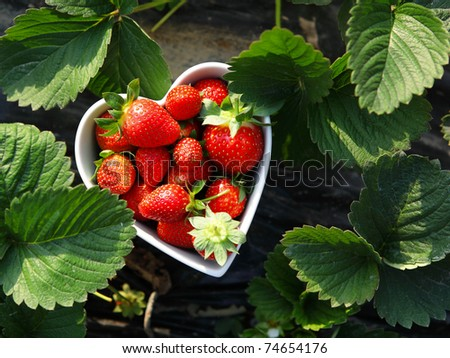 strawberry in heart shape bowl - stock photo