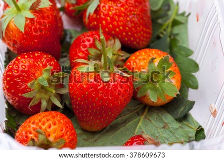 strawberry in natural background
