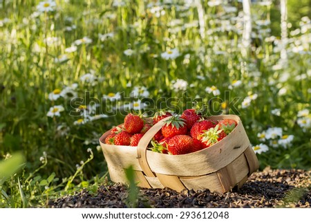 Strawberry in the basket on the chamomile grass background. Image with selective focus
