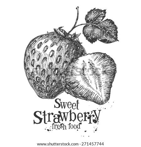 strawberry on a white background. sketch - stock photo