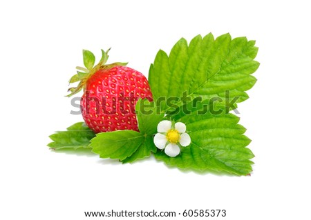 Strawberry on Green Leaf - stock photo
