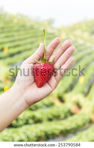 Strawberry on hand with beautiful green background. - stock photo