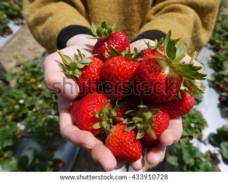 Strawberry on human hands - stock photo