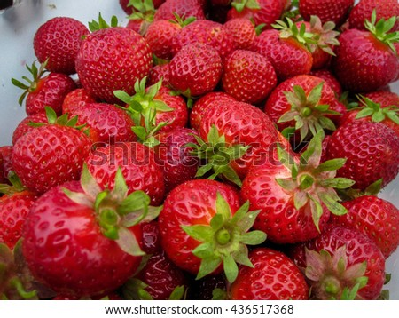 Strawberry red for the background great harvest