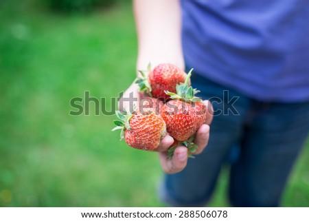 Strawberry/selective focus - stock photo