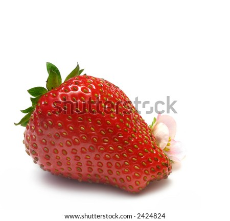 Strawberry with pink strawberry flower, isolated on white