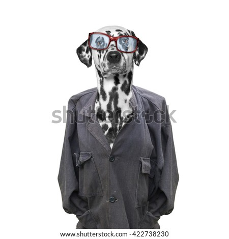stray and homeless dog looking for home and owner -- isolated on white - stock photo