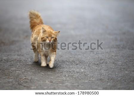 Stray cat - stock photo