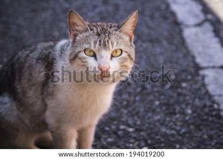 Stray cat - stock photo