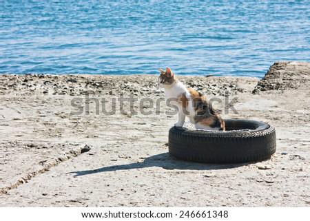 Stray cat at the sea shore - stock photo