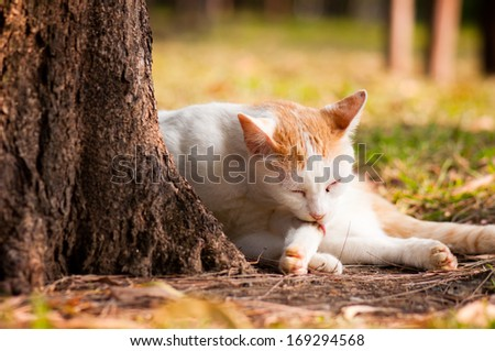 stray cat cleaning Itself in public park - stock photo