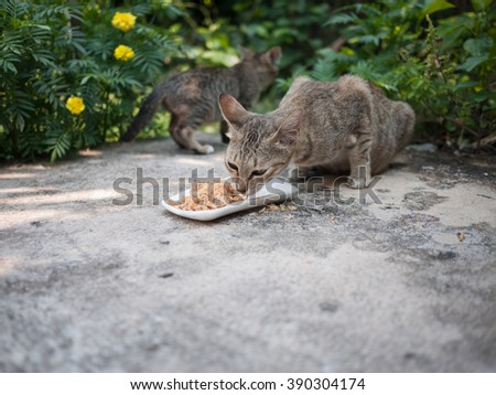 Stray cat eating food. Close up - stock photo