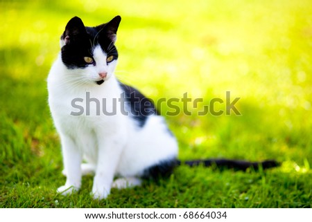 stray cat - felis catus - sitting on green grass and looking with intense - stock photo