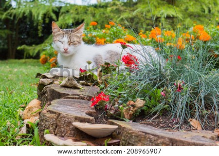 Stray cat in a garden of Burgas