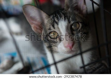 Stray Cat in cage - stock photo