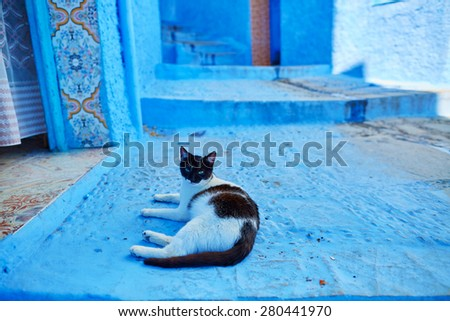 Stray cat in Chefchaouen, Morocco, small town in northwest Morocco known for its blue buildings - stock photo