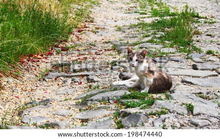 Stray cat on a deserted paved road - stock photo