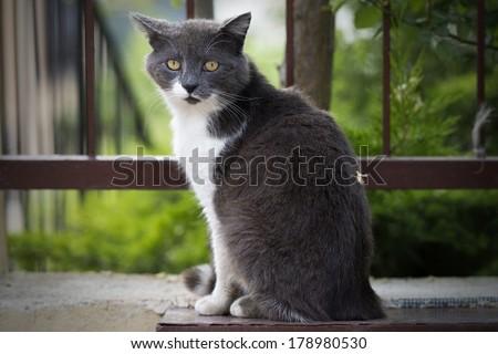Stray cat on a wall. - stock photo