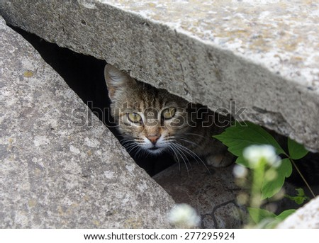 Stray cat peeking from the slit - stock photo