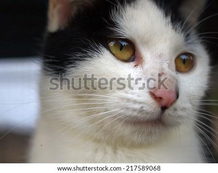 Stray cat photographed in a park in Yokohama, Japan. - stock photo