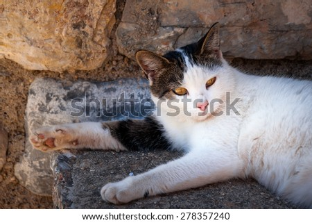 Stray Cat resting in shadow - stock photo