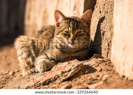Stray cat resting   on sun light with its eyes closed, warm color, copy-space