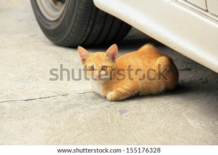 Stray cat sit under the car - stock photo