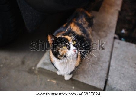 stray cat sitting on the pavement - stock photo