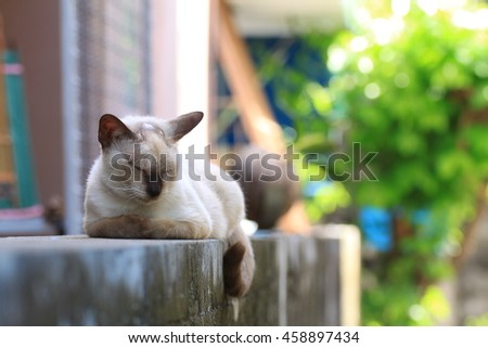 Stray cat sleeping on the fence , Thailand SiSawat cat species