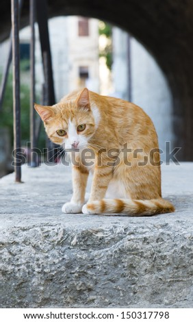 Stray cat waiting for something to eat. - stock photo