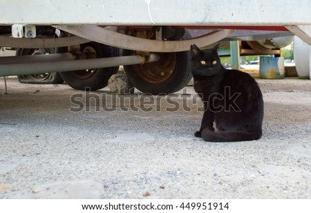 Stray Cat With Yellow Eyes - stock photo